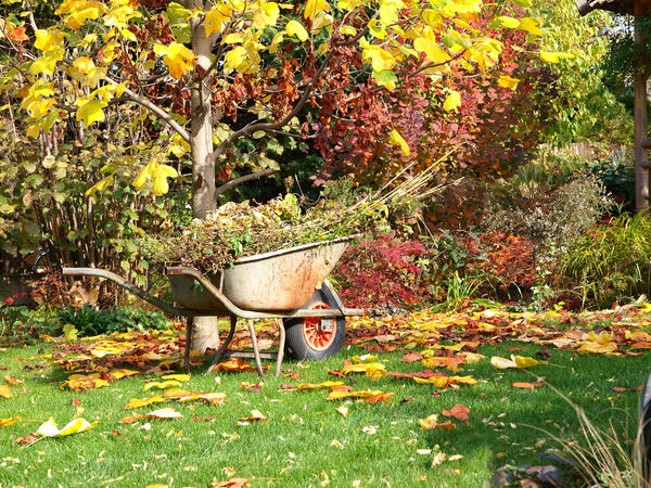 Подготовка садового участка к зиме поздней осенью