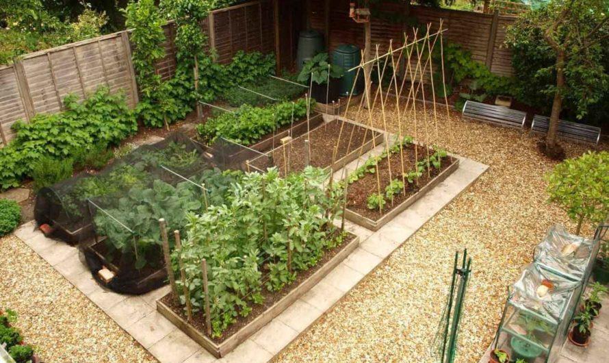 Идеи обустройства грядок на огороде