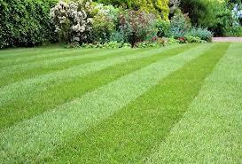 Как сделать газон полосатым?
