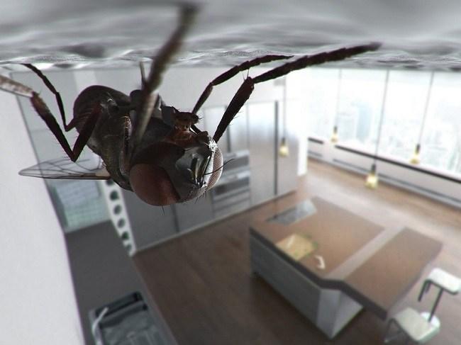 5 способов, как избавиться от мух в доме и на даче