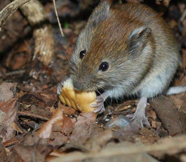 Как избавиться от мышей на даче: топ-5 способов
