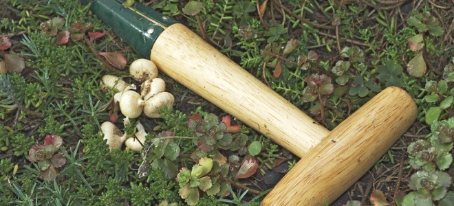 10 основных инструментов для озеленения участка