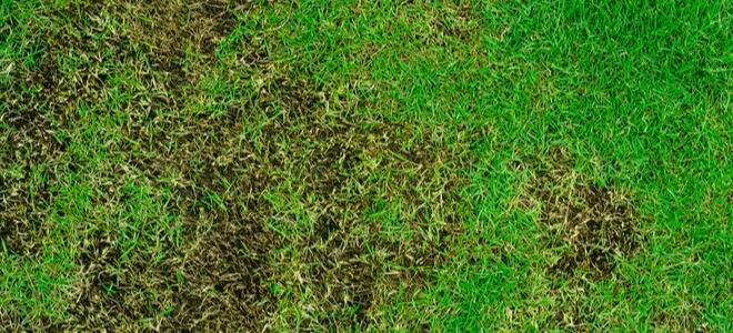 Что такое краска для газона и стоит ли ее использовать?