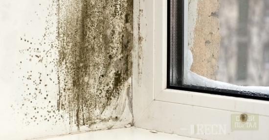 Как удалить плесень на стенах?